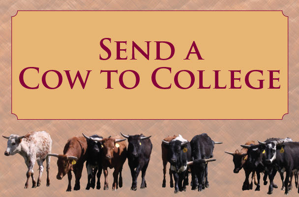 send a cow to college?